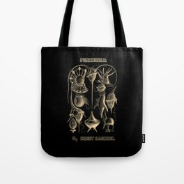 """""""Peridinea"""" from """"Art Forms of Nature"""" by Ernst Haeckel Tote Bag"""