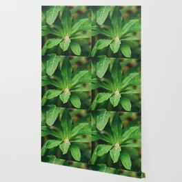 Garden Greens 3 Wallpaper
