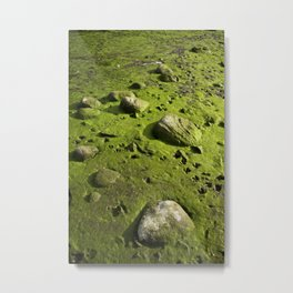 A Dry Pond Reveals Much Beneath Metal Print