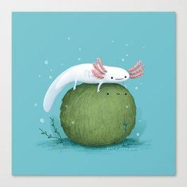 Axolotl on a Mossball Canvas Print