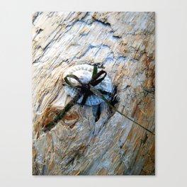 Seashell Present Canvas Print