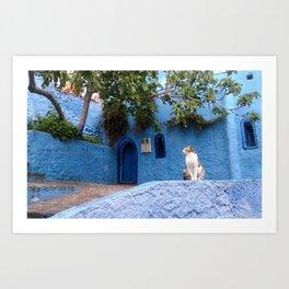 Blue City Morocco - Cat photo Art Print