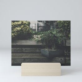 Potted plant on a wooden plank in the garden Mini Art Print