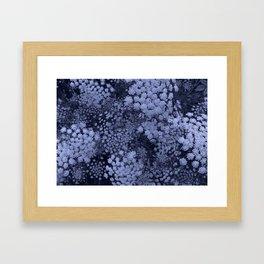 Blue Laceflower Framed Art Print