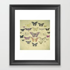 Butterflies and Moths Framed Art Print