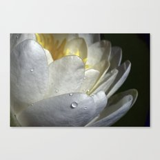 Water Lily Simplicity Canvas Print