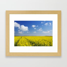Path through blooming canola under a blue sky with clouds Framed Art Print