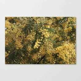 Nature marvels us with simple things Canvas Print