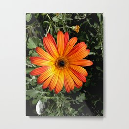 Garden Flowr - Orange Metal Print