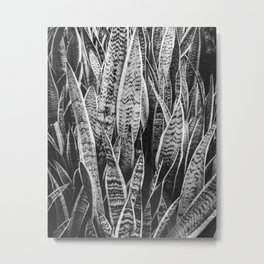 Plant Photography Tropical Exotic Plants Snake Plant Tongue Beauty Wild Nature Black and White Metal Print