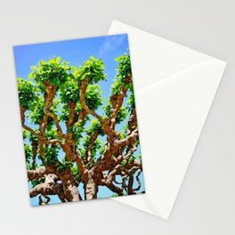 Gnarly Tree Of San Francisco Stationery Cards