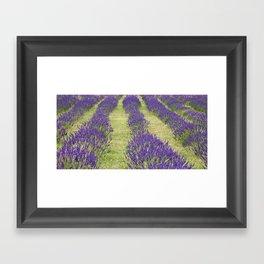 Suffolk Lavender Farm Framed Art Print
