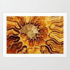 AMAZING AMMONITE Art Print