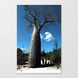 Madagascar: Baobab Tree Canvas Print