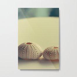 Shells I Metal Print