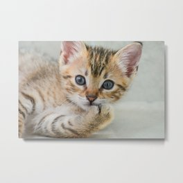 Smirking kitten Metal Print