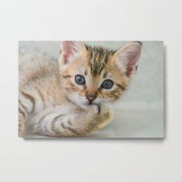 Smirking kitten Metal Print