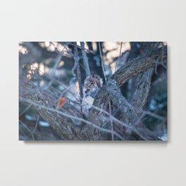 Squirrel eating on sunset during winter Metal Print
