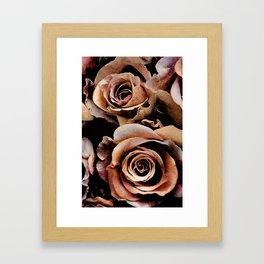 Vintage rose(3) Framed Art Print