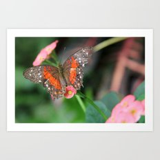 Butterfly On a Pink Flower Art Print