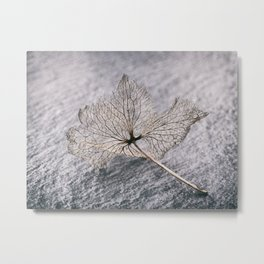 Leaf Skeleton Metal Print