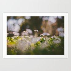 White Daisy Art Print
