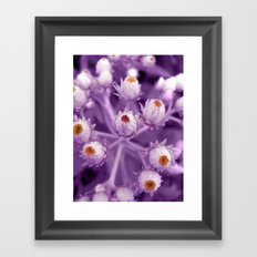 violet beauty Framed Art Print