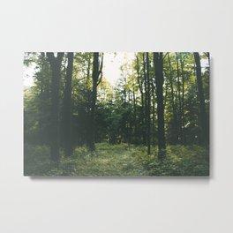 Forest XIX Metal Print