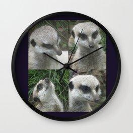 Meerkat meerkats cute animal animals wildlife nature sweet adorable Wall Clock