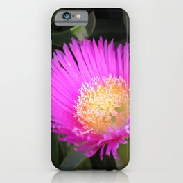 Pink Ice Plant Flower iPhone Case