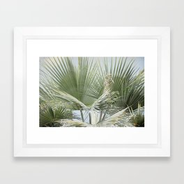 Palm Leaves in the Breeze  Framed Art Print