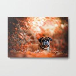 Autumn Pug Metal Print