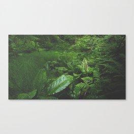 Old Growth Ferns Canvas Print
