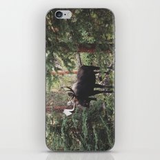 The Modest Moose iPhone & iPod Skin