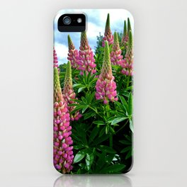 Rose Lupins in the Garden iPhone Case