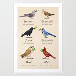 Birds, Herbs, and their Uses Art Print
