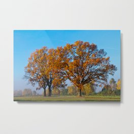 Oaks in the misty Autumn morning (Golden Polish Autumn) #2 Metal Print