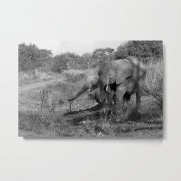 Elephants in Benin Metal Print