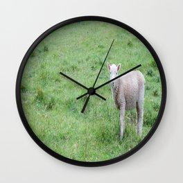 "Lamb ""Dang Paprazzi"" Wall Clock"