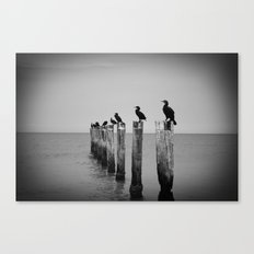 Black and White birds on a post photography Canvas Print