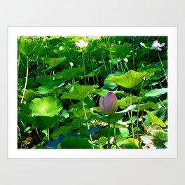Lotus #2 Art Print