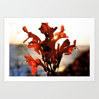Laguna Red Art Print