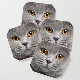 Cat in Grey Coaster