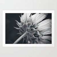 Black and White Sunflower Art Print