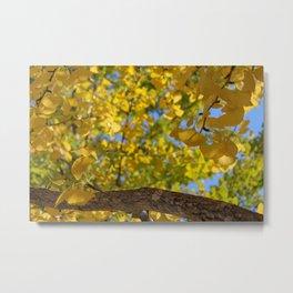 Golden Ginkgo Leaves Metal Print