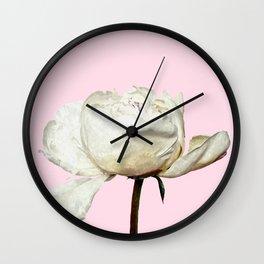 White Peony Pink Background Wall Clock