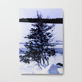 The fir tree and snow, So north! Color. Metal Print