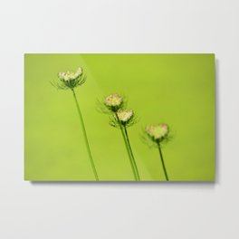 Chartreuse Queen Anne's Lace Metal Print