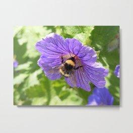 Purple Pollen Metal Print