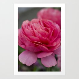 Vivid pink flower Art Print